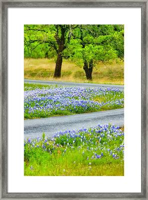 Blue Bonnets Framed Print by Joan Bertucci