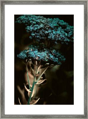 Blue Bouquet Framed Print by Bonnie Bruno
