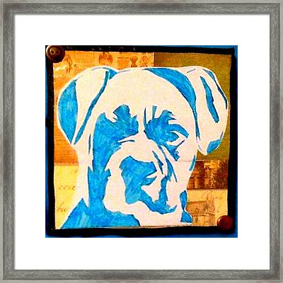Blue Boxer Framed Print by Ashley Reign