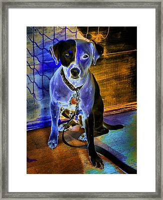 Blue Boy 2 Framed Print by Robert McCubbin