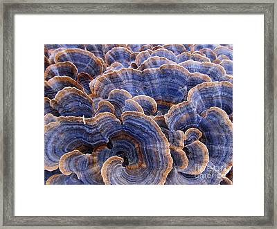 Blue Bracket Macro Framed Print