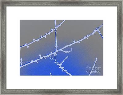 Blue Branches 2 Framed Print by Carol Lynch