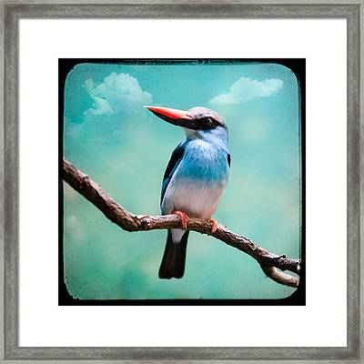 Framed Print featuring the photograph Blue Breasted Kingfisher by Gary Heller