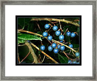 Framed Print featuring the photograph Blue Bush Berries  by Leanne Seymour