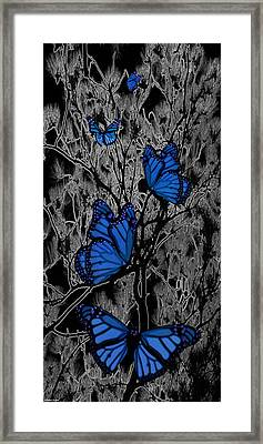 Blue Butterflies Framed Print by Barbara St Jean