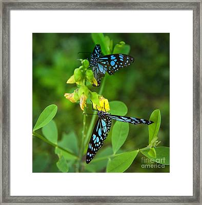Blue Butterflies In The Green Garden Framed Print by Regina Koch