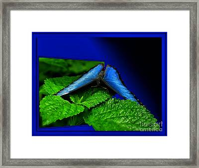 Blue Butterfly 02 Framed Print by Thomas Woolworth