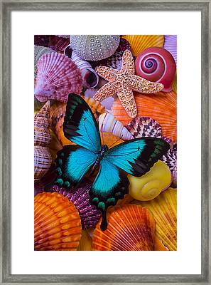 Blue Butterfly Among Sea Shells Framed Print by Garry Gay