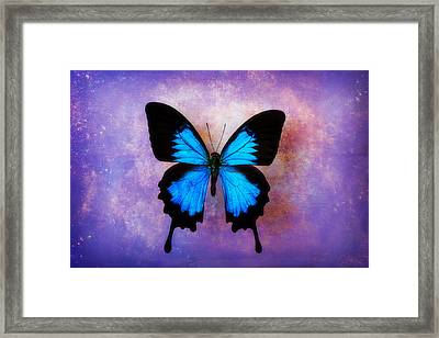 Blue Butterfly Dreams Framed Print