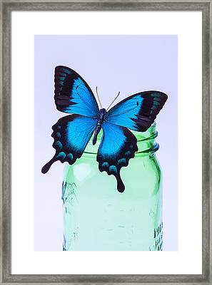 Blue Butterfly On Green Jar Framed Print by Garry Gay