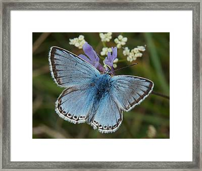 Framed Print featuring the digital art Blue Butterfly by Ron Harpham