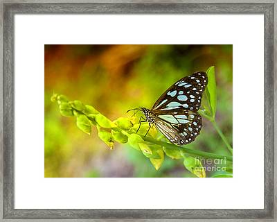 Blue Butterfly With Beautiful Colors Framed Print by Gina Koch