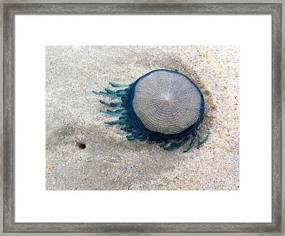 Blue Button #2 Framed Print