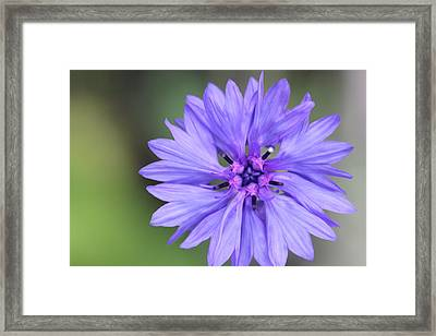Blue Button Framed Print