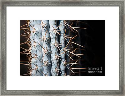 Blue Cactus Framed Print