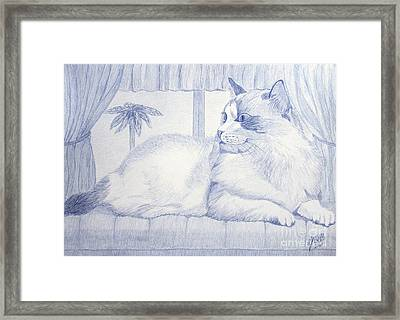Blue Cat Framed Print by Cybele Chaves