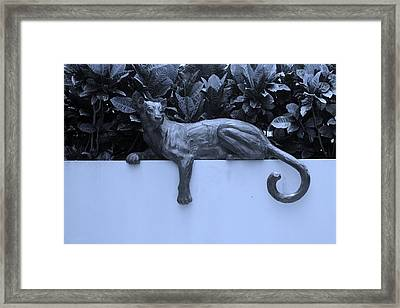 Blue Cat Framed Print by Rob Hans