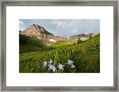 Handie's Peak And Blue Columbine On A Summer Morning Framed Print