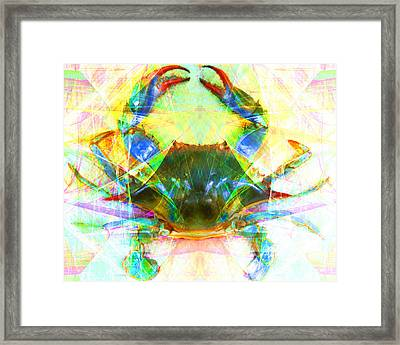 Blue Crab 20140206v1 Framed Print