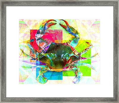 Blue Crab 20140206v3 Framed Print
