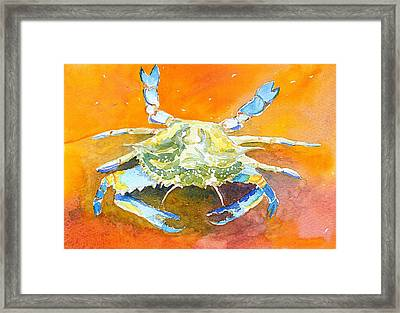 Blue Crab Framed Print by Anne Marie Brown