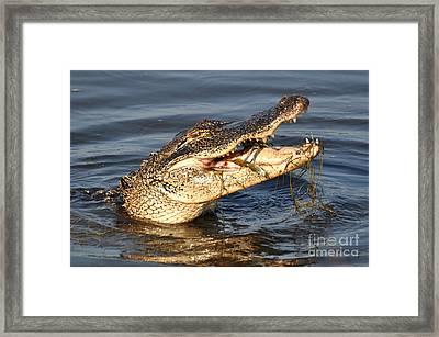 Framed Print featuring the photograph Blue Crab Tar-tar by Kathy Baccari