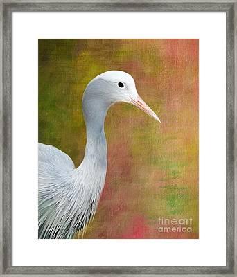 Blue Crane Framed Print