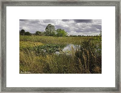 Blue Cypress Wetlands Framed Print