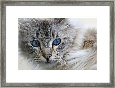 Blue D4228 Framed Print by Wes and Dotty Weber