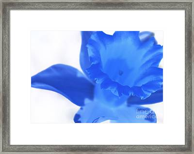 Framed Print featuring the photograph Blue Daffodil by Andy Prendy