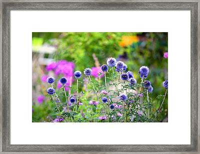 Blue Dance Of The Plants Framed Print