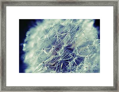 Framed Print featuring the photograph Blue Dandy by Mindy Bench