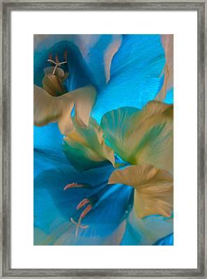 Blue Danube Framed Print by Bobby Villapando