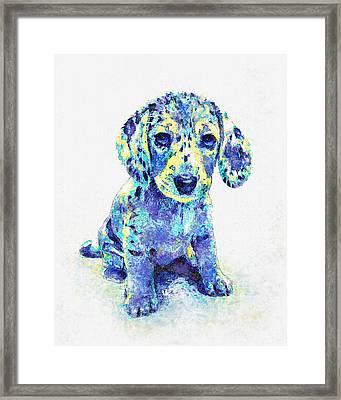 Blue Dapple Dachshund Puppy Framed Print by Jane Schnetlage