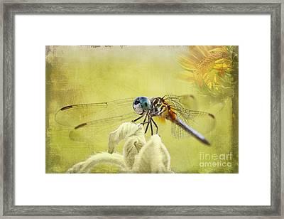 Blue Dasher Framed Print by Pamela Gail Torres