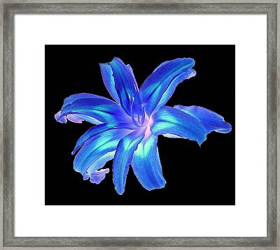 Blue Day Lily #2 Framed Print by Jim Whalen