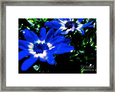 Blue Daze Framed Print by Cathy Dee Janes