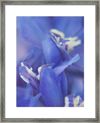 Blue Delight Framed Print