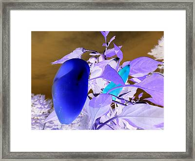 Framed Print featuring the photograph Blue Delight by Mike Breau