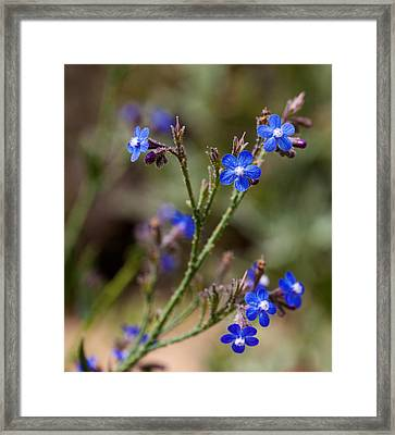 Framed Print featuring the photograph Blue Delight by Uri Baruch