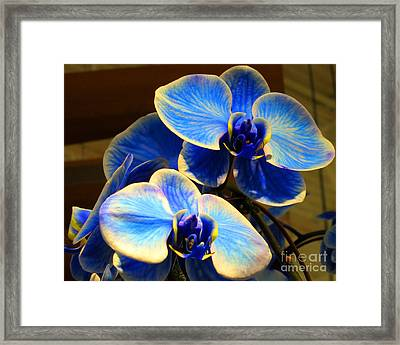 Blue Diamond Orchids Framed Print by Patricia Januszkiewicz