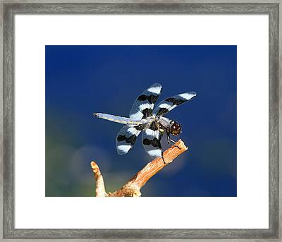 Blue Framed Print by Donna Kennedy