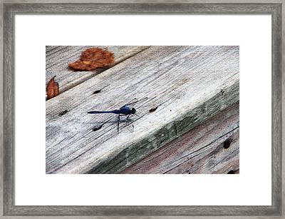Blue Dragonfly Framed Print