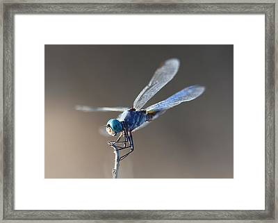 Blue Dragonfly Framed Print