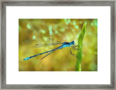 Blue Dreams.. Framed Print