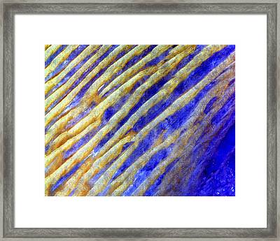 Blue Dunes Framed Print by Adam Romanowicz