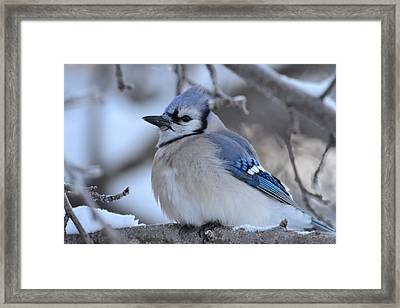 Blue Edition  7 Of 10 Framed Print