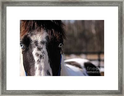 Blue Eye Stare Framed Print