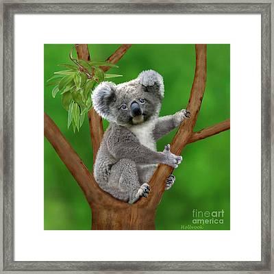 Blue-eyed Baby Koala Framed Print