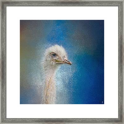 Blue Eyed Beauty - White Ostrich - Wildlife Framed Print